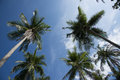 The palmas trunks of palm trees reaching for sky Stock Images