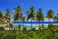 Palme-Paradies Stockbild