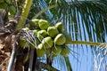 Palmeira solitária em um dia ventoso, ensolarado Fotografia de Stock Royalty Free