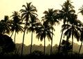 Palmen Lizenzfreies Stockfoto