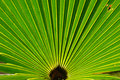 Palmetto Fan Royalty Free Stock Photos