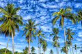 Palms against the blue sky Royalty Free Stock Photo