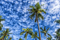 Palms against the sky Royalty Free Stock Photo