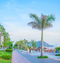 The palms in Alanya promenade Royalty Free Stock Photo
