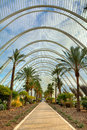 Palms Alley In City Of Arts An...