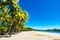 Palms at the beach. Royalty Free Stock Photo