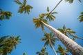 Palms on a beach tall dominican can touch the sky Stock Photos