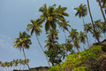 Palms on the cabo de rama beach goa and rocks south india Royalty Free Stock Photo