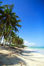 Palms on caribbean beach with white sand Royalty Free Stock Photography