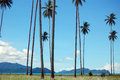 Palms at coast sea bay view papua new guinea Stock Photo