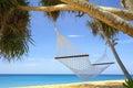 Palms and hammock Stock Photo
