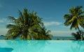 Palms kho chang island tailand island Royalty Free Stock Image