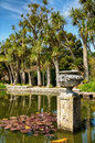 Palms in logan botanic gardens and a pond with lily pads on the mull of galloway south west scotland Royalty Free Stock Images