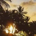 Palms in margarita island beach Royalty Free Stock Photo