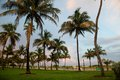 Palms in Miami Beach before sunset Royalty Free Stock Photo
