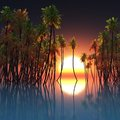 Palms in ocean and sunset the Stock Photography