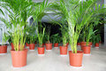 Palms and other plants in pots stand on hall Royalty Free Stock Photo