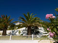 Palms and property Stock Images