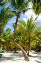 Palms at Saona Island Royalty Free Stock Photography