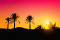 Palms silhouette at sunset background Royalty Free Stock Images