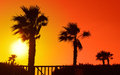 Palms silhouette at sunset background Royalty Free Stock Photo