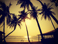 Palms silhouettes against sun vintage retro style goa india Royalty Free Stock Photo