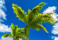 Palms in the sky Royalty Free Stock Photo