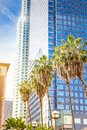 Palms and skyscrapers in the city of Los Angeles. Royalty Free Stock Photo