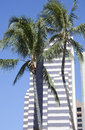 Palms and Skyscrapers Royalty Free Stock Photo