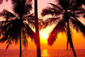 Palms and sun, Royalty Free Stock Photo