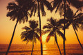 Palms and sun, tropical sunset Royalty Free Stock Photo
