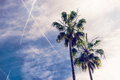 Palms at sunny day at blue sky with clouds background. Royalty Free Stock Photo