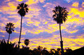 Palms at Sunset Royalty Free Stock Photo