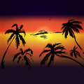 palms and sunset vector background for text, tourism, leisure, s Royalty Free Stock Photo