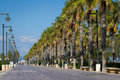 Palms tree avenue Royalty Free Stock Photo