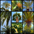 Palms trees mosaic Royalty Free Stock Image