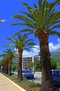 Street with tropic  trees standing in a row against the blue sky promenade.Kos island ,Greece