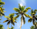 Palms under blue sky branches of coconut Stock Images