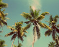 Palms under blue sky vintage retro style branches of coconut Royalty Free Stock Photos