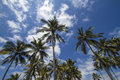Palms under sky branches of coconut blue Stock Images