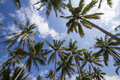 Palms under sky branches of coconut blue Royalty Free Stock Photos
