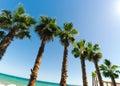 Palms under the sun