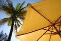Palmträdparaplyyellow Arkivfoton