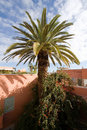 Palmtree Stock Photo