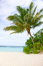 Palmtree in a beach Royalty Free Stock Photo
