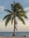Palmtree lazy people under on beach Royalty Free Stock Photos