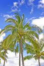 Palmtree summer time blue sky Royalty Free Stock Image