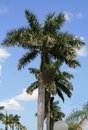 Palmtrees Royalty Free Stock Photography