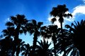 Palmtrees against the sky Royalty Free Stock Photo