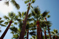 Palmtrees on the beach in Cannes Royalty Free Stock Images